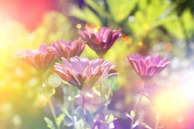 fleurs violettes jaunes bijou botanique bijoux floral collier végétal