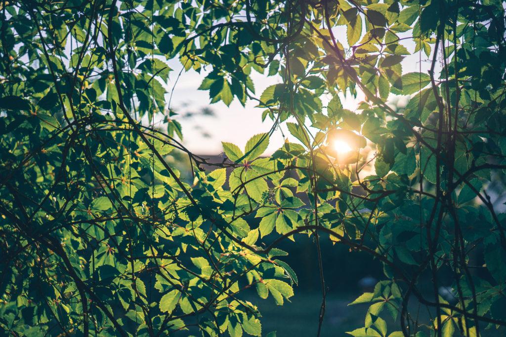 nature-en-automne-bijou-floral-resine-fleurs-nature collier végétal résine d'inclusion bijoux bio fleurs naturelles cadeau floral femme argent sterling 925 feuilles séchées